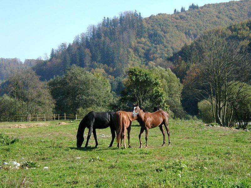 9 Nízke Tatry - Bystrá 5